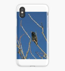 Local bird sitting pretty iPhone Case/Skin