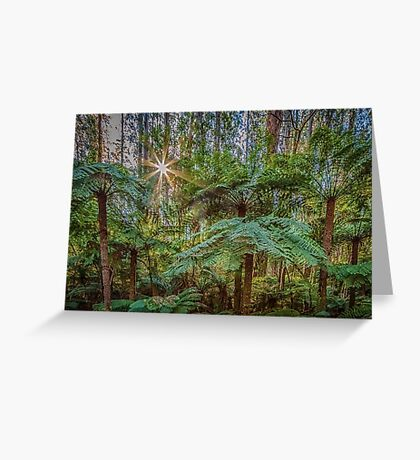 Sunlit Glade, Marysville, Victoria Greeting Card