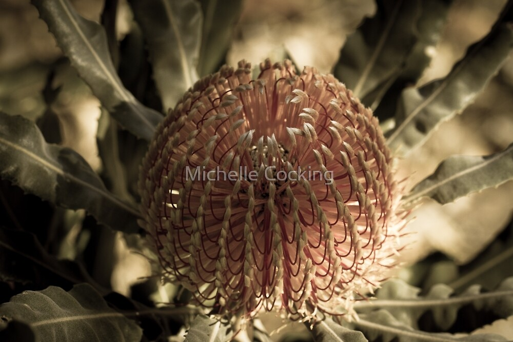 Aged Banksia by Michelle Cocking