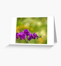 fuchsia orchid flower on blur background Greeting Card