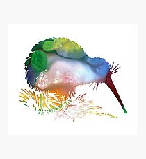 Kiwi Bird Photographic Print