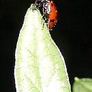 Ladybug Leaftop treats  by leih2008