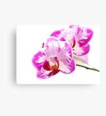Peaceful orchid Canvas Print