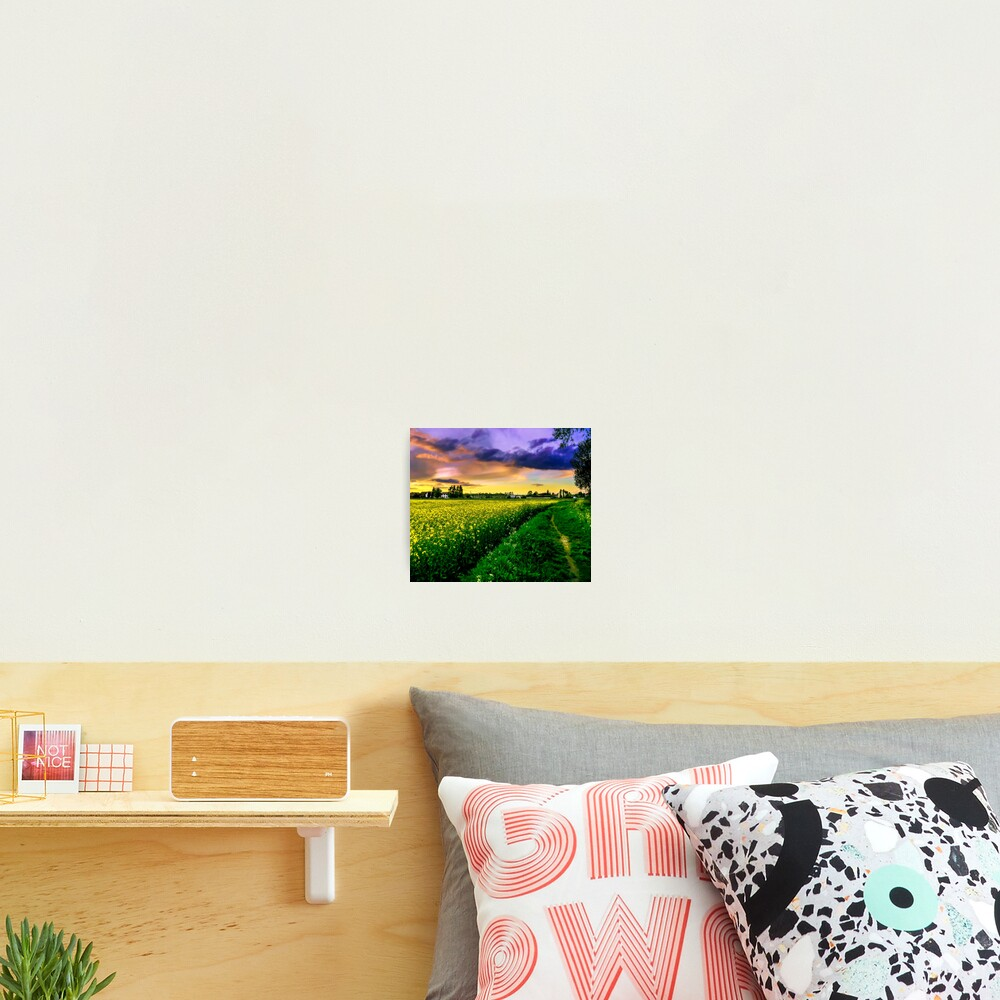 Rapeseed Sunset Photographic Print