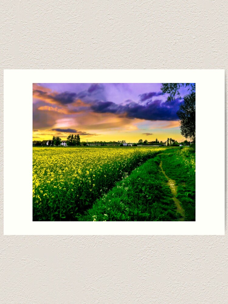 Alternate view of Rapeseed Sunset Art Print