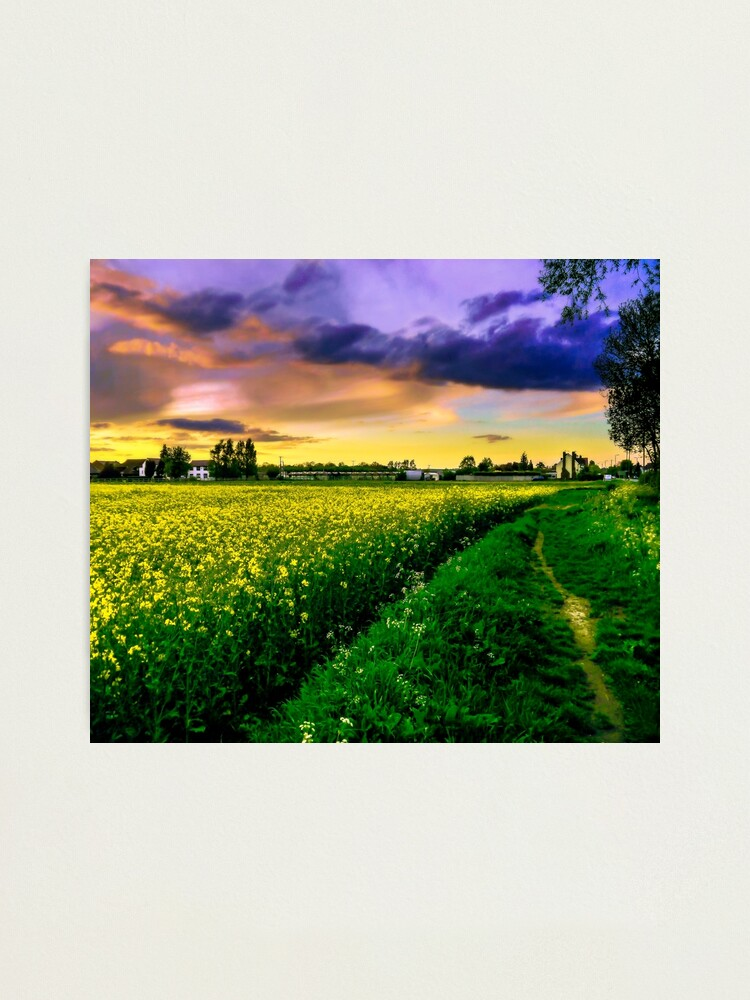 Alternate view of Rapeseed Sunset Photographic Print
