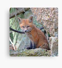 Fox Wildlife Canvas Print
