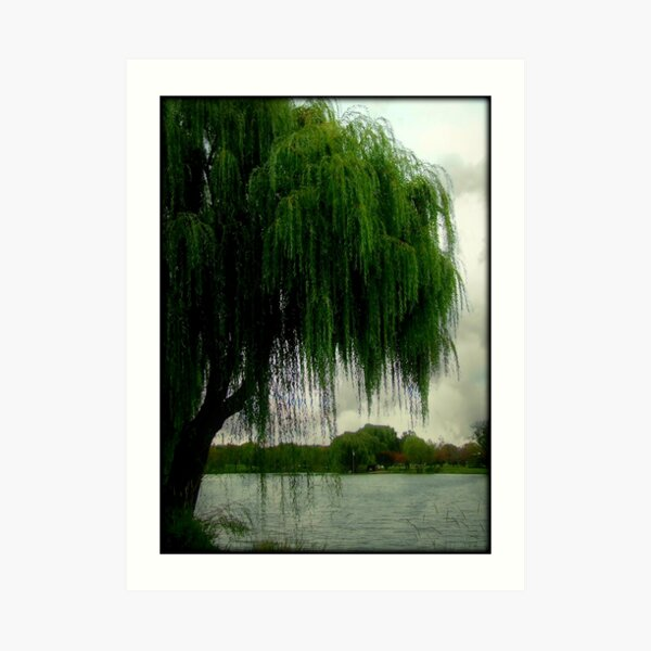 My beautiful weeping willow © Art Print