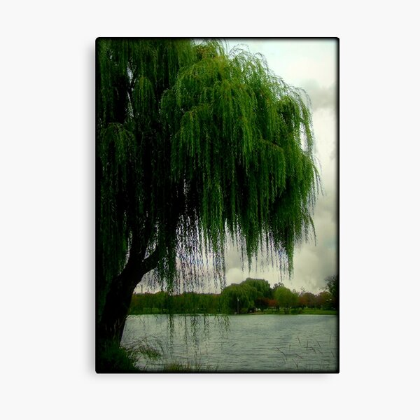 My beautiful weeping willow © Canvas Print