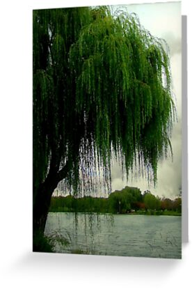 My beautiful weeping willow © by Dawn Becker