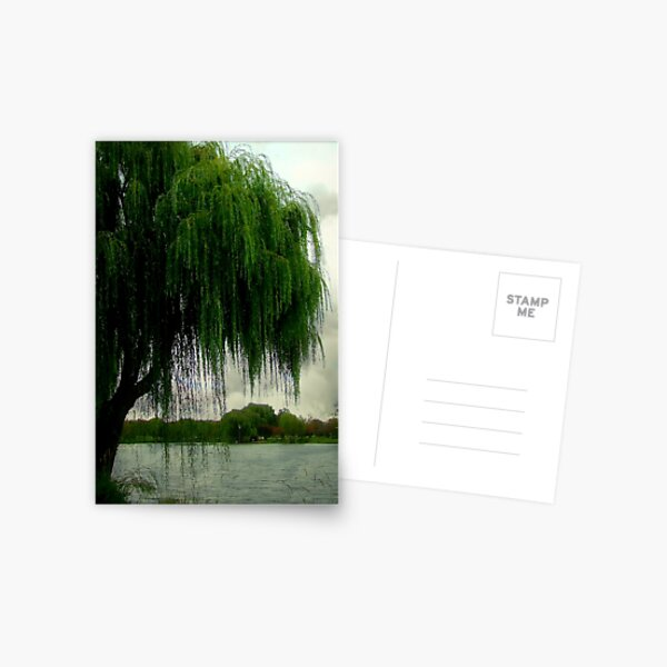 My beautiful weeping willow © Postcard