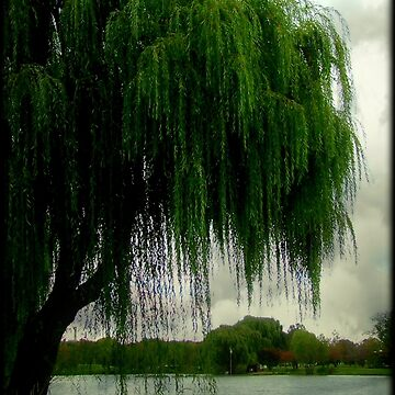 My beautiful weeping willow © by Eastsider