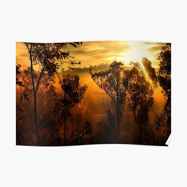 Morning in the Trees Poster