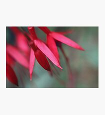 Fuschia, a floral abstract Photographic Print