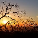 Forest Branches In The Sunset Light by Bo Insogna