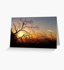 Forest Branches In The Sunset Light Greeting Card