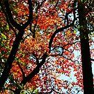 In Autumn's Shadow by Asoka