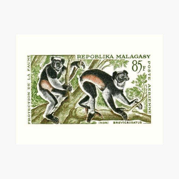1961 Madagascar Indri Lemur Postage Stamp Art Print