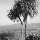 Two palm trees by Agnes McGuinness