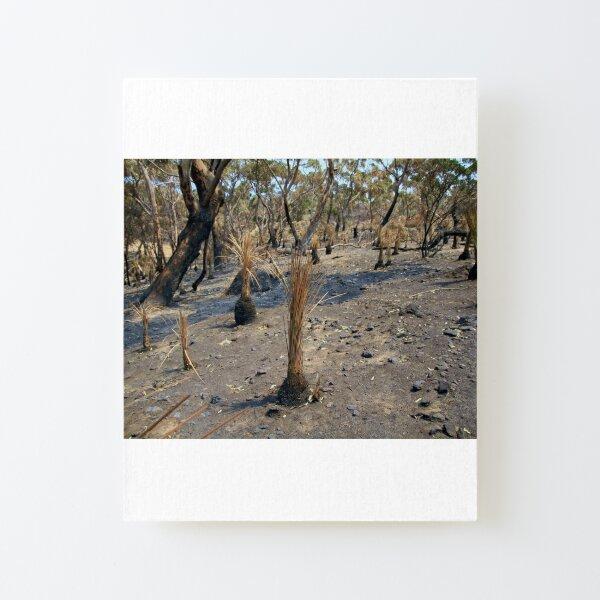 After 2020 Kangaroo Island Fire - Yakka Regrowth Canvas Mounted Print