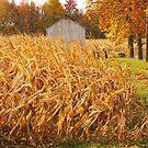 Autumn Corn by Mary Carol Story