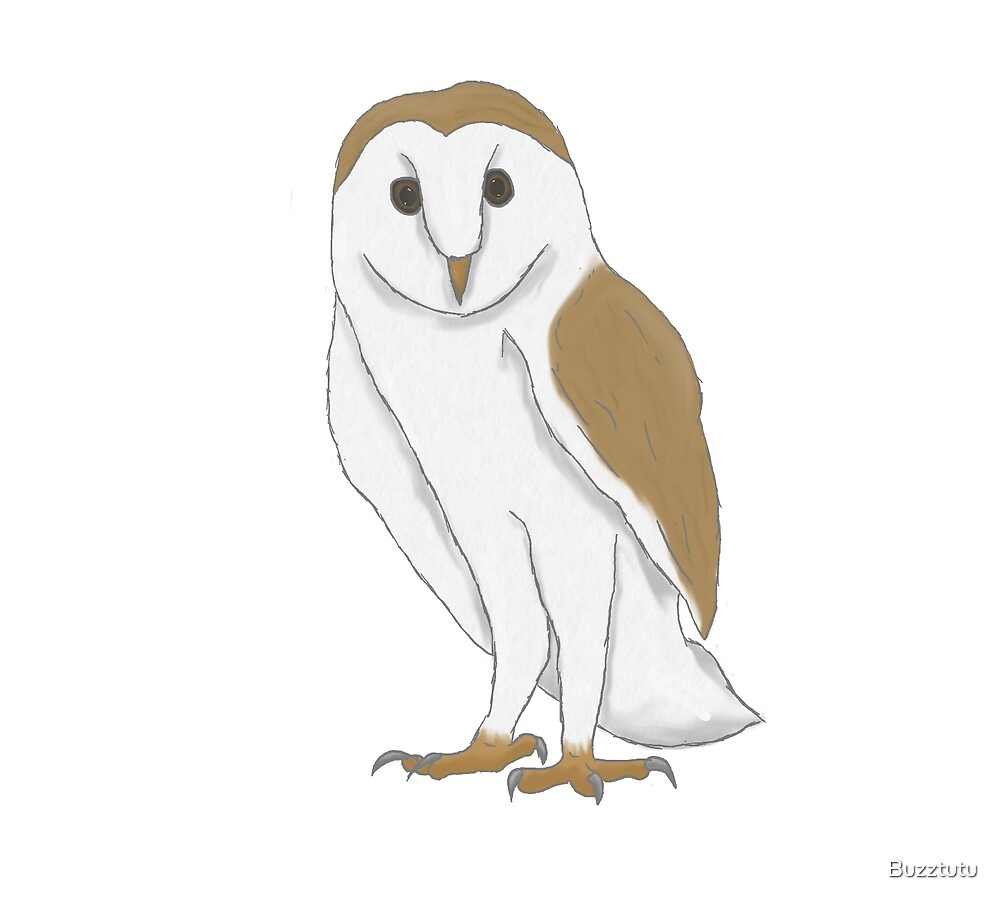 Barn Owl by Buzztutu