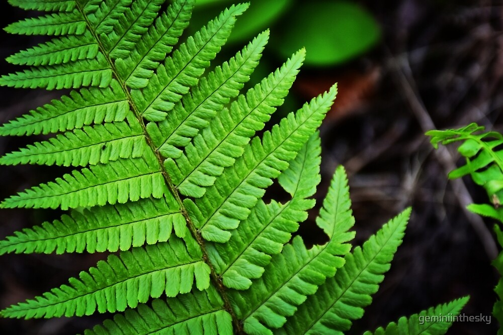 Bright Green Fern by geminiinthesky