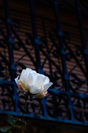 Rose by camisetaencasa