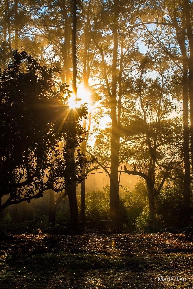 Stunning morning by Maria Tan