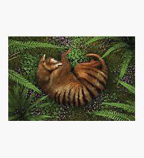 """""""Thylacine"""" Photographic Print"""