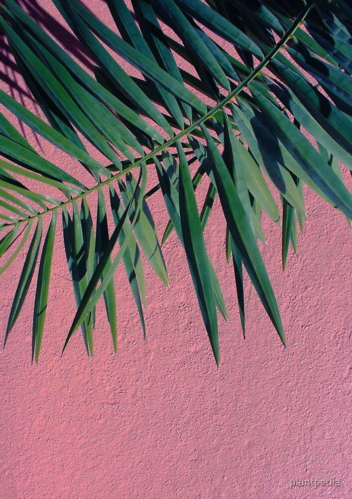 Palm Leaves by plantpedia