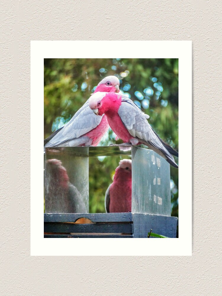 Alternate view of Pink and Grey Galahs Art Print