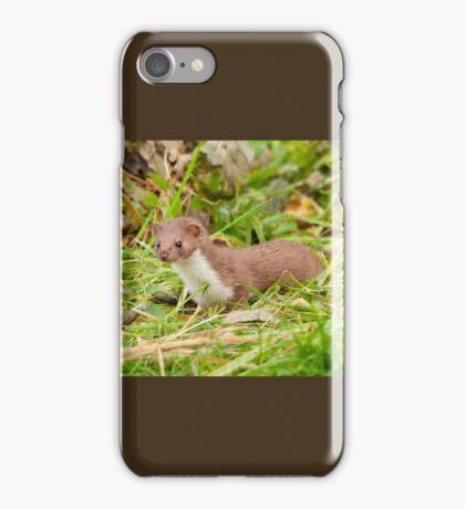 Weasel ~ Mustela nivalis iPhone Case/Skin