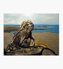 Marine Iguana Photographic Print
