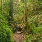 Canyon steps by Michael Matthews
