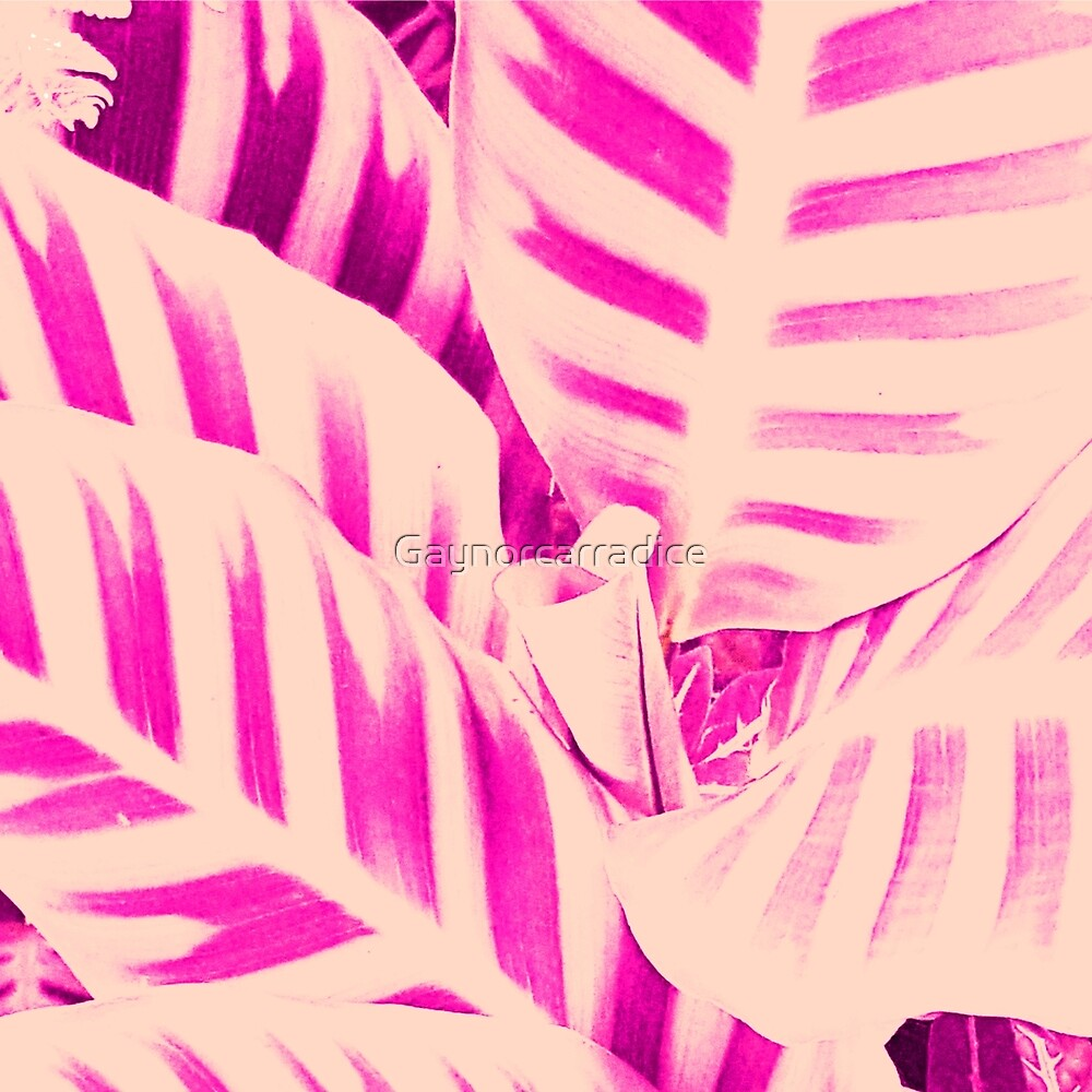 Pink tropical foliage by Gaynorcarradice
