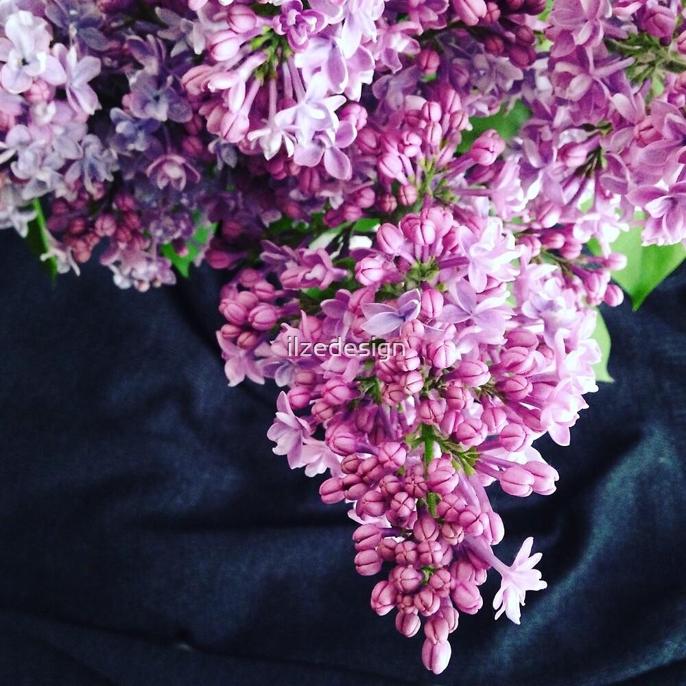 Lilac by ilzedesign