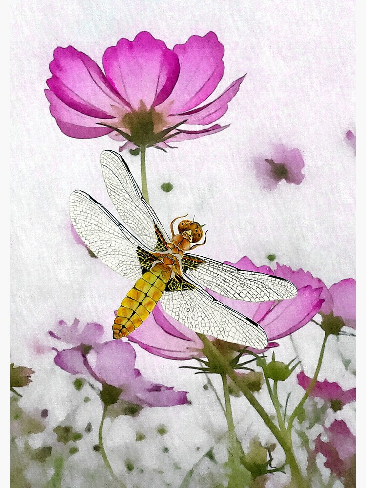 Broad bodied Chaser Dragonfly Insect on Cosmos Watercolor Painting Artwork by alison777