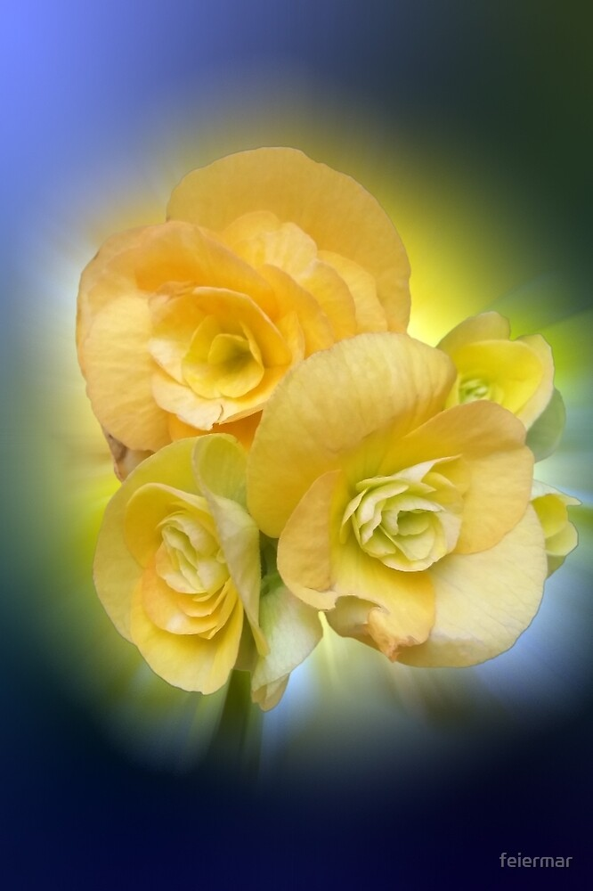 yellow flowers shining by feiermar