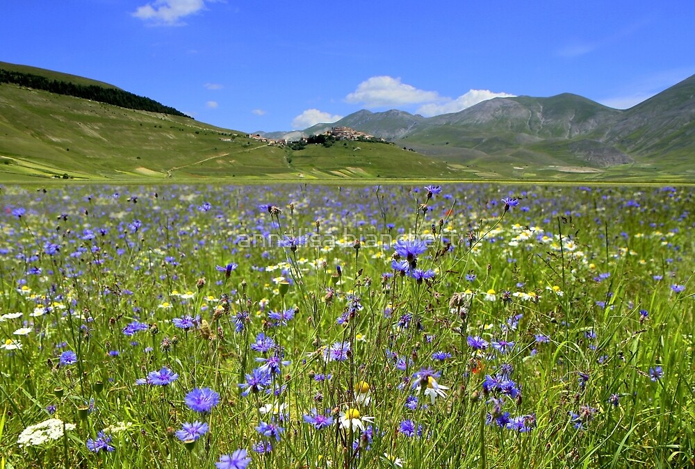 The cornflowers of Castelluccio  by annalisa bianchetti