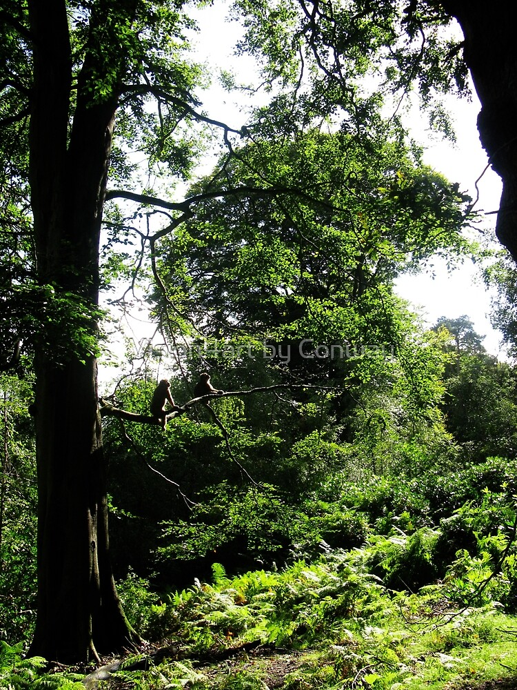 Monkey Forest  by TomConway