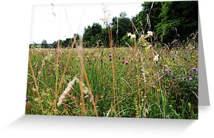 Meadow, wild nature, grass and flowers by Tom Conway