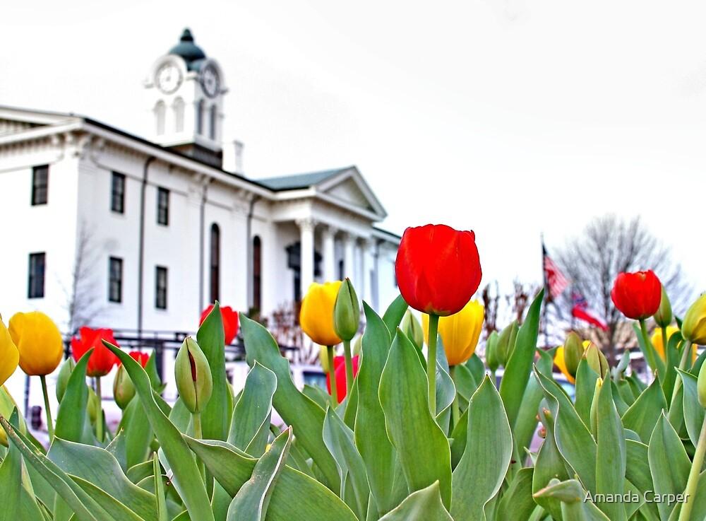 Courthouse Tulips by Amanda Carper