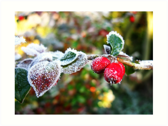 Frozen Red Berries with ice crystals by Tom Conway
