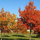 Autumn splendour by Maria1606