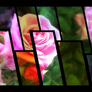 Pink Roses in Anzures 1 Tinted 1 by TravelPhotoArt