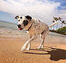 Strollin' down the beach, baby. by Alex Preiss