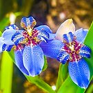 Orchids...... by buddybetsy