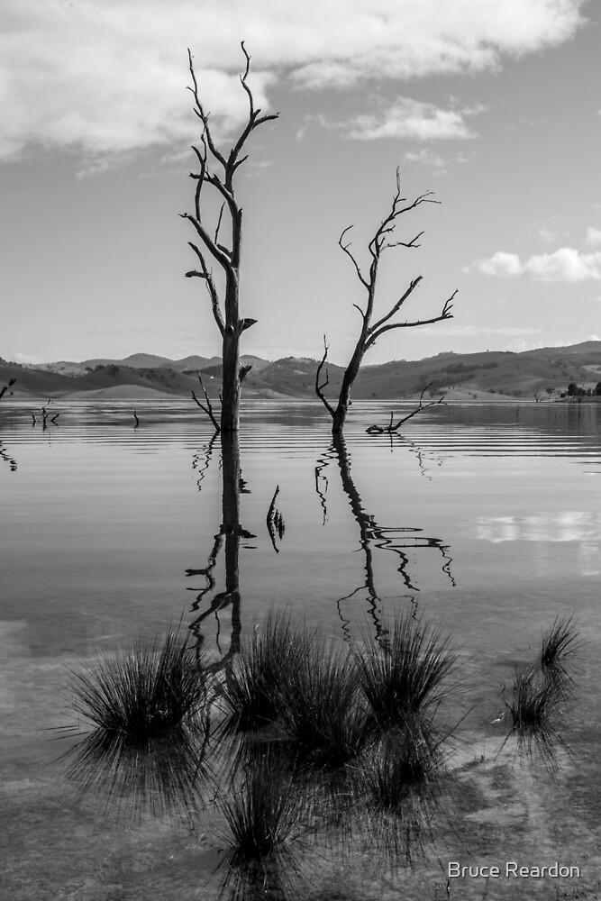 Dreaming Water by Bruce Reardon