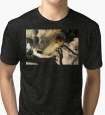 African Lion Tri-blend T-Shirt